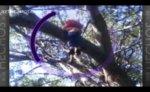 duende en el arbol 2